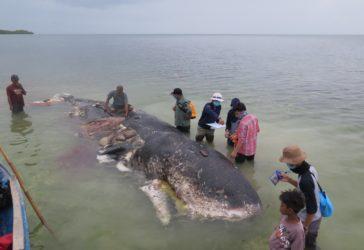 Indonésie Tuée par 29kg de plastique