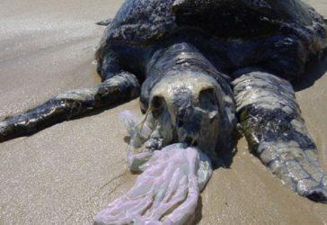 Tortue de mer etouffee par du plastique