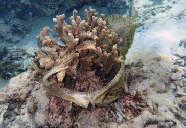 corail étouffé par la pollution