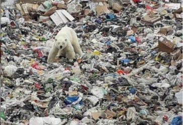 un-oso-polar-en-norilsk